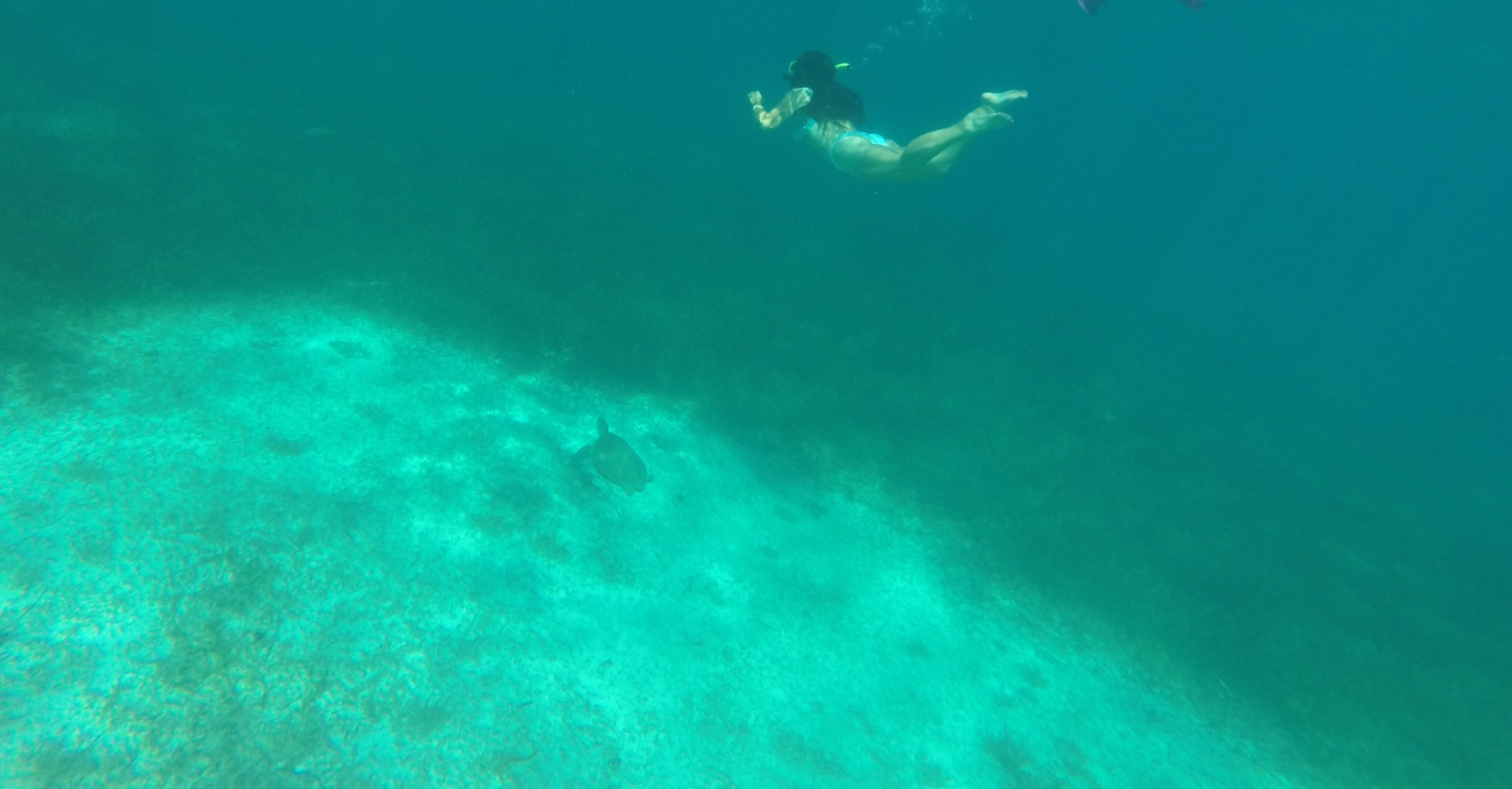 Snorkeling at Coral Gardens!